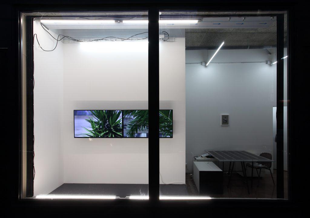 Extra tropical, 2020, vue d'installation, ( 2 HD vidéos : Extra tropical (yucca) - Extra tropical (arecaceae) 6min chacune, productions La Junqueira et CAC Passerelle) © Objets pointus